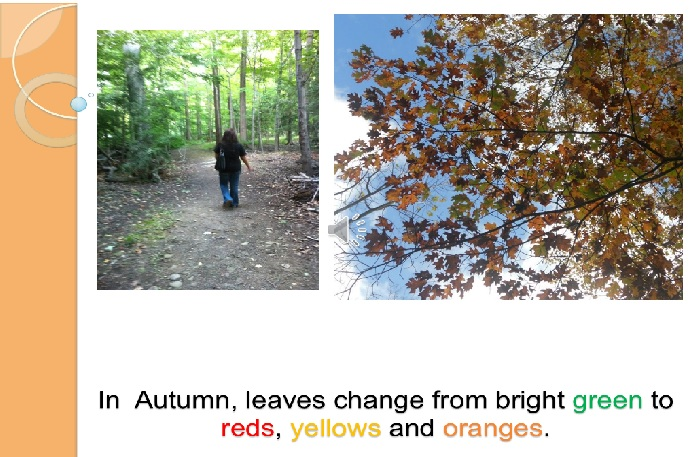Figure 5: Fall colors